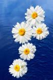 Bloemen en Water Stock Foto