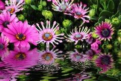 Bloemen en water Stock Foto's