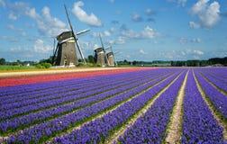 Bloemen en windmolens in Holland royalty-vrije stock afbeelding