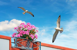 Bloemen en zeemeeuwen royalty-vrije stock afbeeldingen