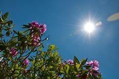 Bloemen en Zon stock afbeelding