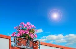 Bloemen en Zon royalty-vrije stock afbeeldingen