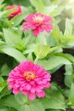Bloemen en zonsopgang royalty-vrije stock fotografie