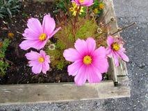 Bloemen - Flores Royalty-vrije Stock Afbeelding