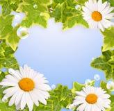 Bloemen frame en bellen stock illustratie