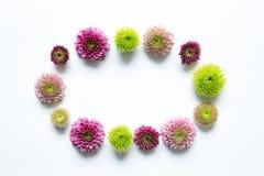 Bloemen frame op witte achtergrond Royalty-vrije Stock Foto
