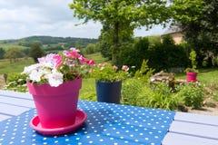 Bloemen in Frans landschap royalty-vrije stock afbeeldingen