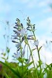 Bloemen - Funcia Royalty-vrije Stock Foto