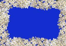 Bloemen geïsoleerdr frame royalty-vrije stock afbeelding