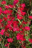 Bloemen, gebied Stock Foto