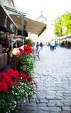 Bloemen in gebloeid Stock Foto