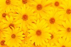 Bloemen gele achtergrond Royalty-vrije Stock Fotografie