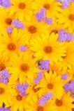 Bloemen gele en purpere achtergrond Stock Foto's