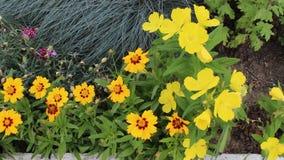 Bloemen gele kleur stock footage