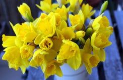 Bloemen - gele narcis stock afbeelding