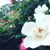 Bloemen in gelijkstroom Stock Afbeeldingen