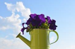 Bloemen in gieter royalty-vrije stock afbeeldingen