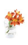 Bloemen in glasvaas stock foto
