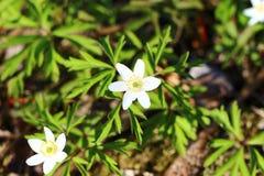 Bloemen Goede achtergrond stock afbeelding