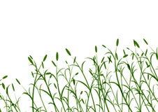 Bloemen gras Stock Foto
