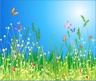 Bloemen, gras en vlinder Royalty-vrije Stock Foto's
