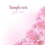 Bloemen grens met roze Dahlia Stock Foto