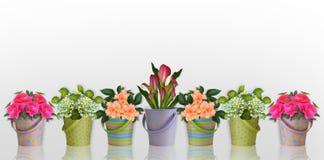 Bloemen grensBloemen in kleurrijke containers Stock Foto's