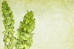 Bloemen Groene Uitstekende Achtergrond royalty-vrije stock afbeeldingen