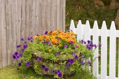 Bloemen in grote pot dichtbij omheining Royalty-vrije Stock Afbeeldingen