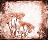 Bloemen grunge Stock Foto's