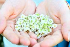 Bloemen in handen Stock Foto's