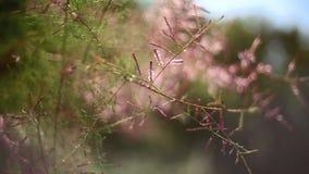 Bloemen het bloeien het slingeren in de wind stock footage