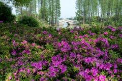 Bloemen in het bos stock foto