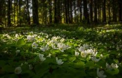 Bloemen in het bos Stock Afbeeldingen