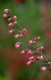 Bloemen het dansen Stock Afbeeldingen
