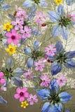 Bloemen het drijven Stock Afbeelding