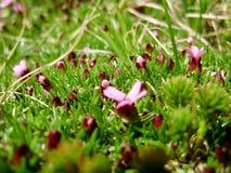 Bloemen in het gras Stock Foto