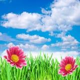 Bloemen in het gras tegen de hemel Stock Foto