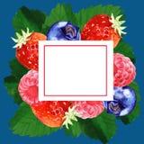 Bloemen het kaderillustratie van de waterverfzomer Royalty-vrije Stock Foto's
