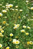 Bloemen in het Kasteel, Montemor o Novo, Portugal Stock Fotografie