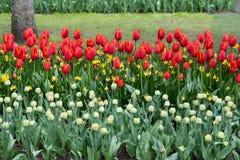 Bloemen in het Keukenhof-park, Lisse royalty-vrije stock afbeelding