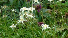 Bloemen in het park stock fotografie