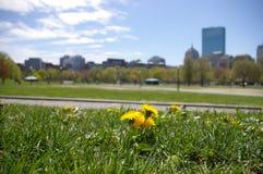 Bloemen in het park Stock Afbeeldingen