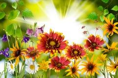Bloemen in het park tegen de zonclose-up stock afbeeldingen