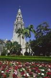 Bloemen in het Park van Balboa, San Diego Stock Afbeelding