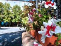 Bloemen in het stadscentrum stock foto