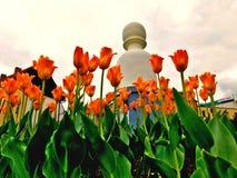 Bloemen in het stadspark, PelhÅ™imov, Tsjechische Republiek stock afbeelding