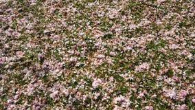 Bloemen het Vallen Royalty-vrije Stock Foto