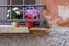 Bloemen in het venster Stock Afbeeldingen