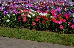Bloemen in het vierkant Royalty-vrije Stock Afbeeldingen
